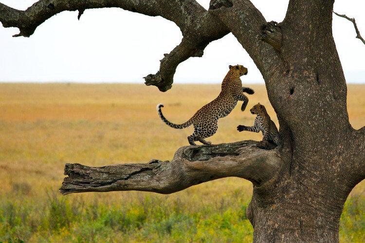 Best of Tanzania - Tarangire, Ngorongoro Crater, Serengeti