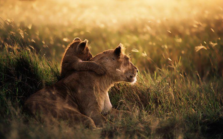 8 zile Safari in Tanzania