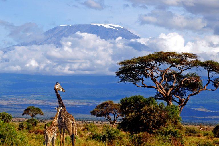 Magica Tanzanie - circuit safari 7 zile / 6 nopti de la/ pana la Arusha