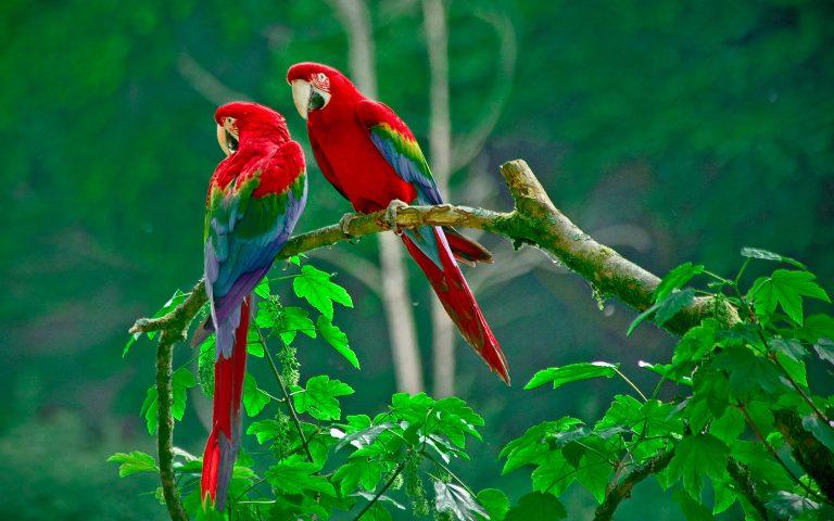 Costa Rica - aventura in padurea tropicala - circuit 9 zile / 7 nopti