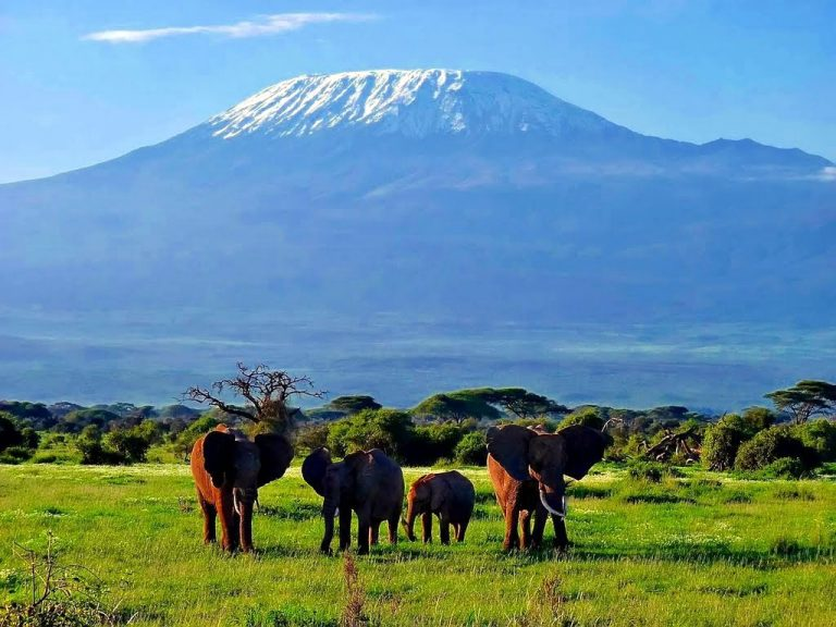 Aventura in Kenia - circuit safari 8 zile / 7 nopti de la/ pana la Mombasa