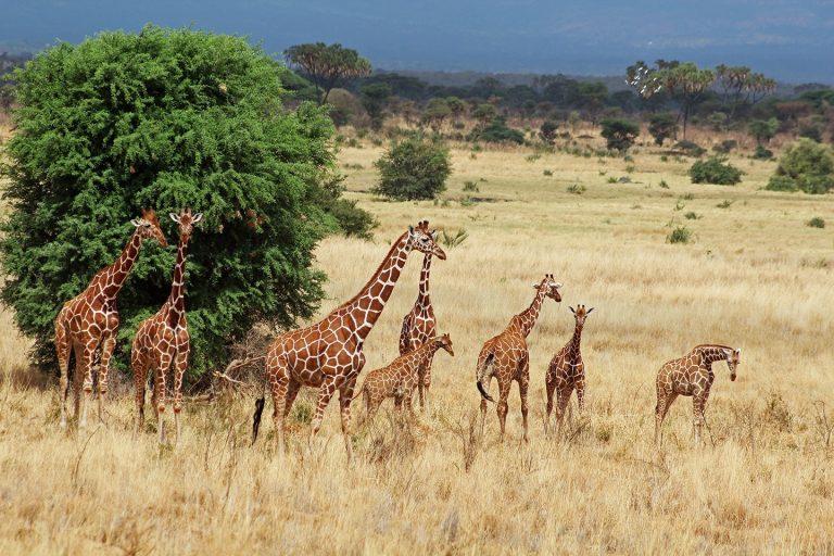 Tanzania & Zanzibar - circuit 12 zile