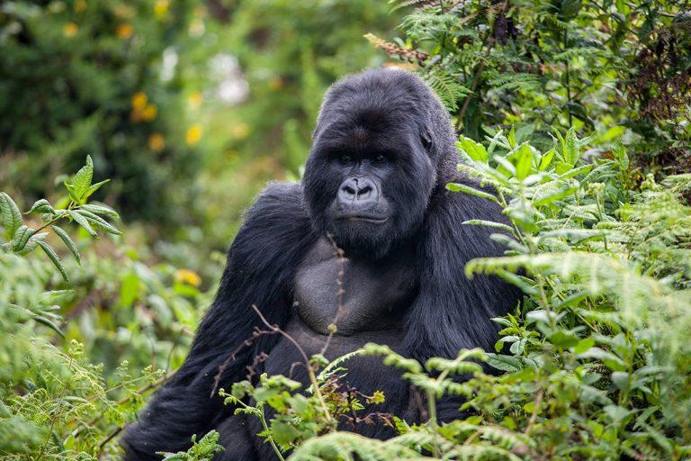 Rwanda si Uganda - safari, trekking, cultura si civilizatie - circuit 16 zile/15 nopti
