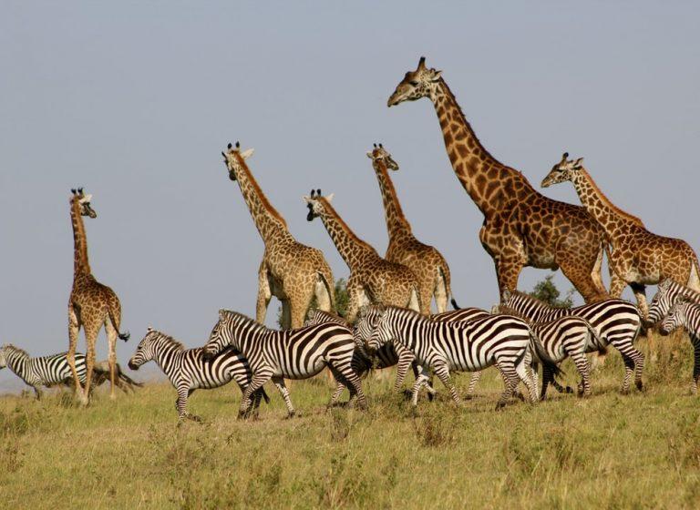 Kenya, Big Five safari si plaja la Oceanul Indian - circuit 7 nopti