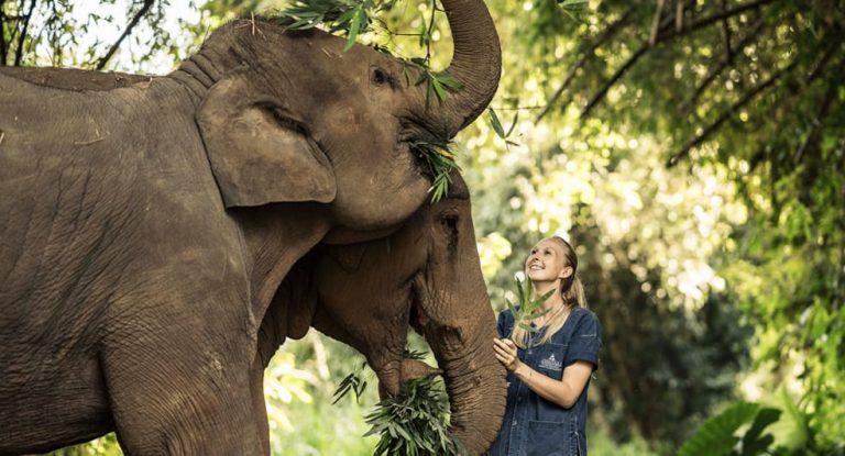 Anantara Golden Triangle Elephant Camp & Resort 5*