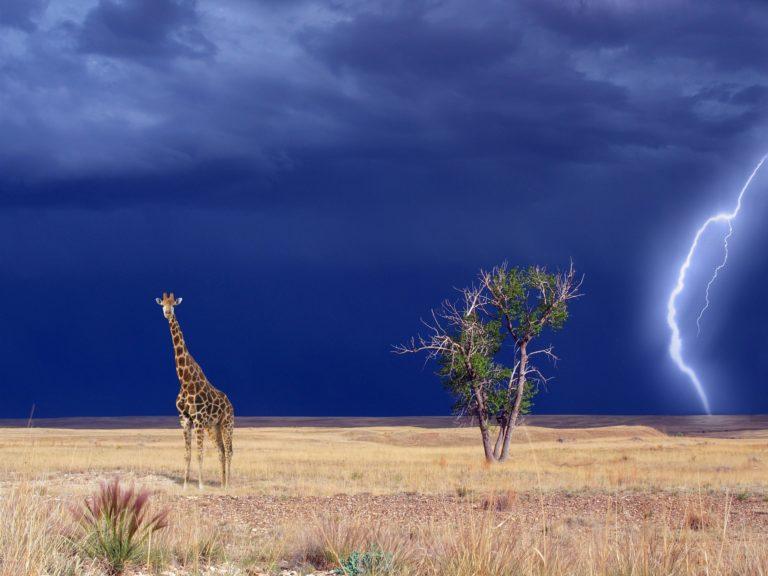 Jambo Kenya - safari in Parcul National Tsavo Est & sejur Mombasa