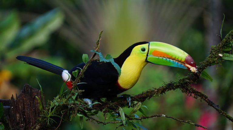 COSTA RICA - Paste in paradisul padurilor tropicale (12 zile/11 nopti)